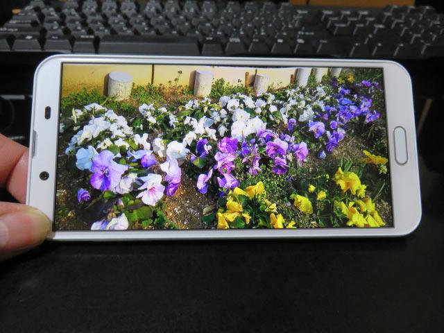 最新アンドロイドスマホのアクオス センス2のAIオートで撮影した花の写真