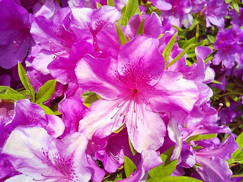AQUOS sense2のカメラの接写モードで撮影した花びらの模様の写真