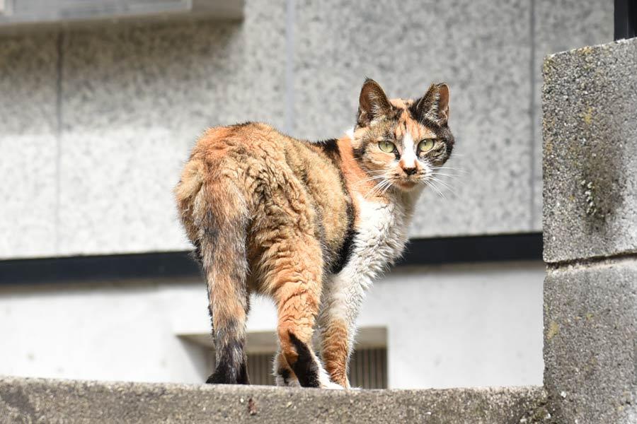 Nikon D750 24-120mmで撮影した作例 猫の写真