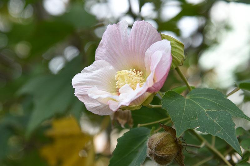 Nikon D750 24-120mmレンズで撮影した作例 背景ボケの花の写真