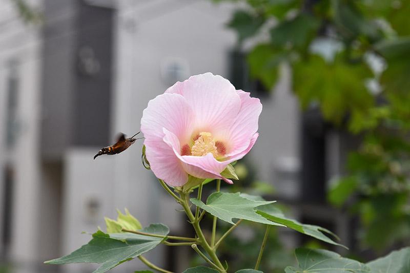 Nikon D750 24-120mmレンズで撮影した作例 花と蝶の写真