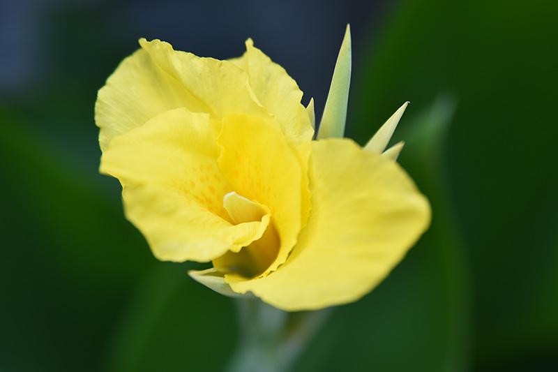 タムロン 28-75 F2.8 ズームレンズの作例 黄色い花の写真