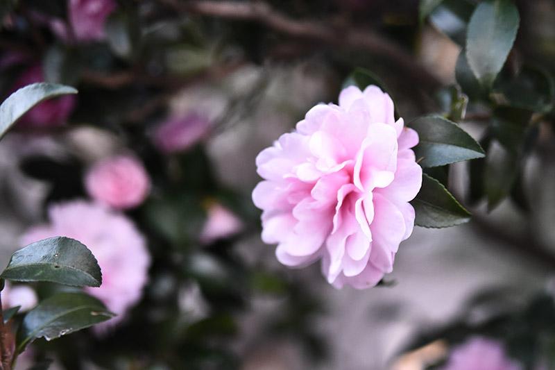 タムロン 28-75 F2.8 ズームレンズの作例 不思議な花の写真1