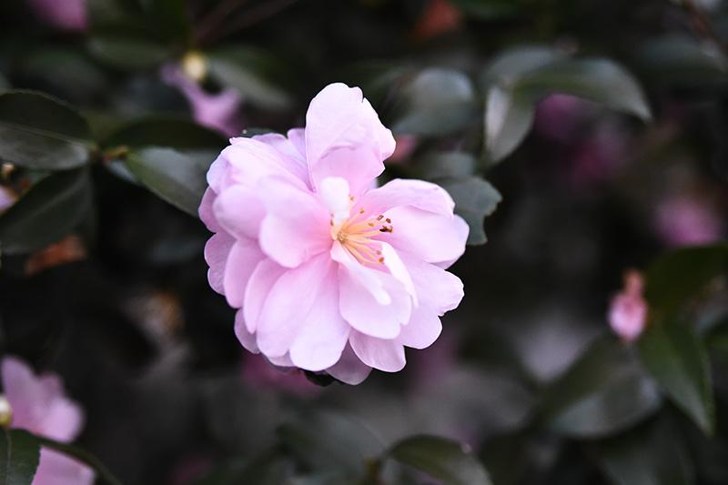 タムロン 28-75 F2.8 ズームレンズの作例 不思議な花の写真2
